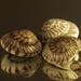 3 Shells, Sea Shells