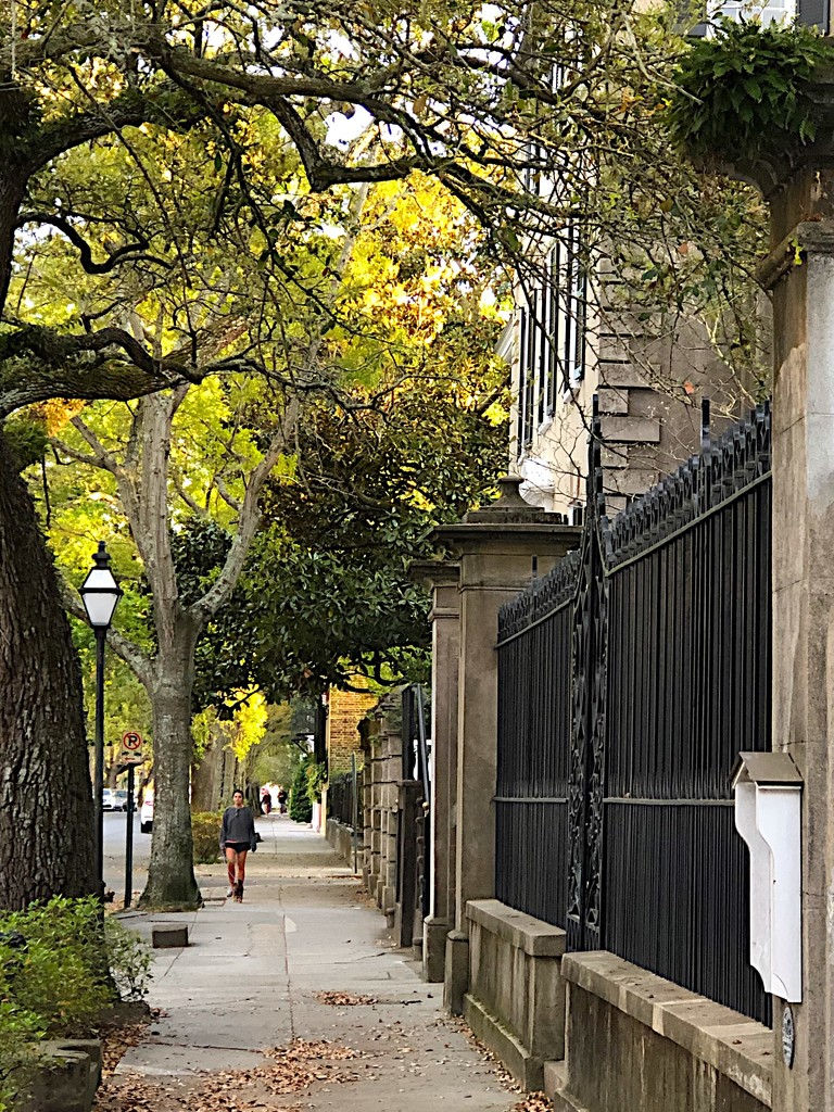 Meeting Street view, historic district of Charleston by congaree