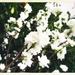 2020-03-31 Bright 'n' White