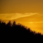 31st Mar 2020 - Sunset Silhouettes P1050286