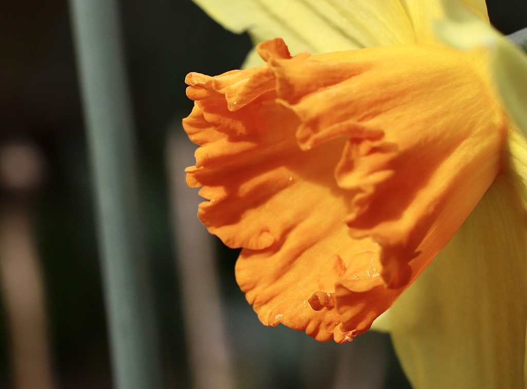 Orange by phil_sandford