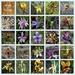 Orchids of Australia