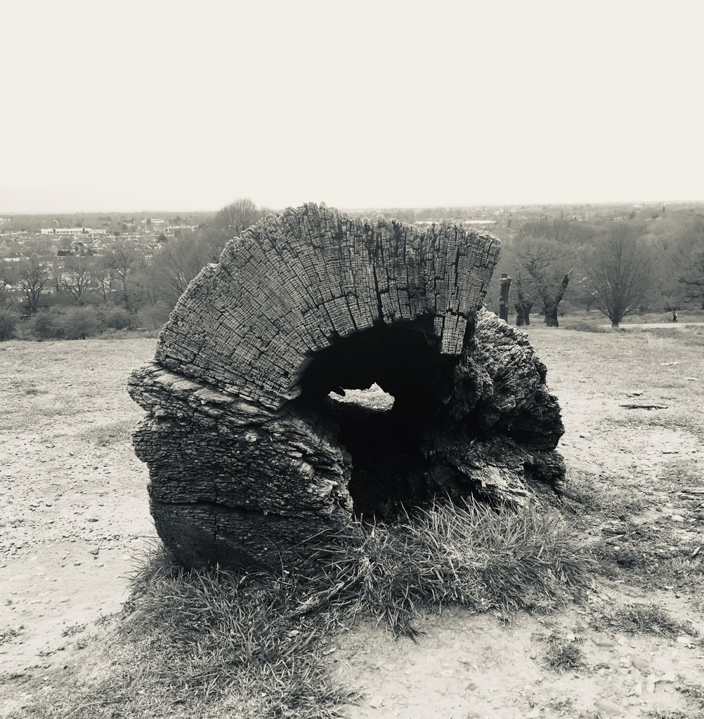 Tree by ottery