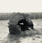 30th Mar 2020 - Tree