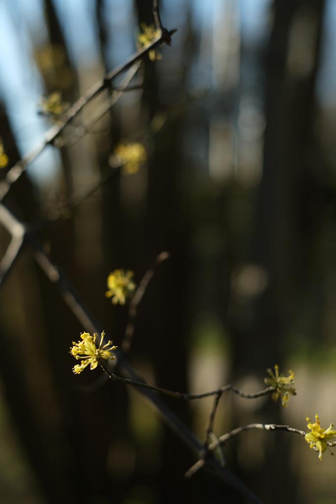 Spring feeling by angelikavr
