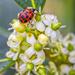 Ladybug by kvphoto