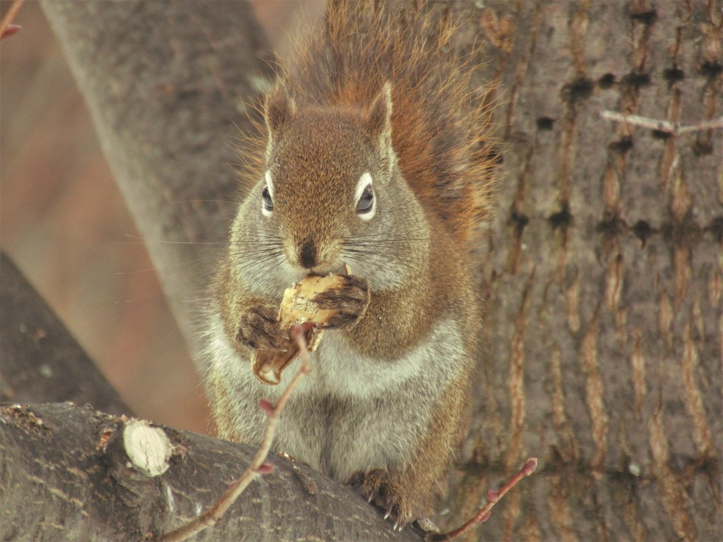 Squirrel enjoying a bite! by radiogirl