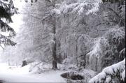 31st Mar 2020 - It wasn't the last snow
