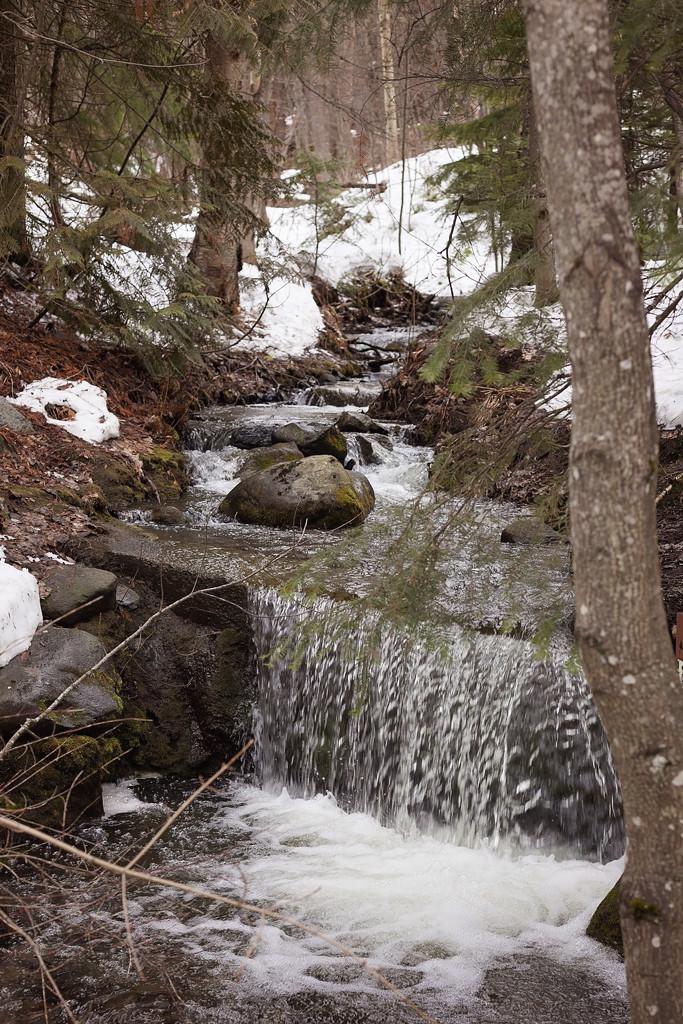 Walk in the woods by kiwichick