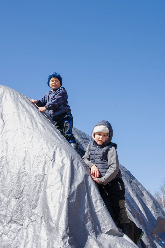 They are Climbing Haybales ... by farmreporter