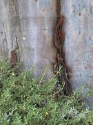1st Apr 2020 - A Tree to Hug