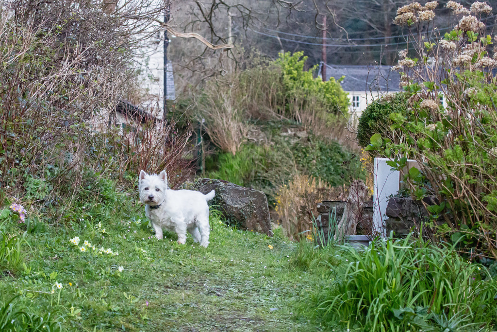 Finlay in the garden by pamknowler