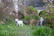 1st Apr 2020 - Finlay in the garden