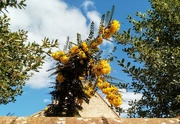 1st Apr 2020 - Yellow Flowers