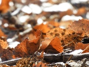 1st Apr 2020 - The Forest Floor