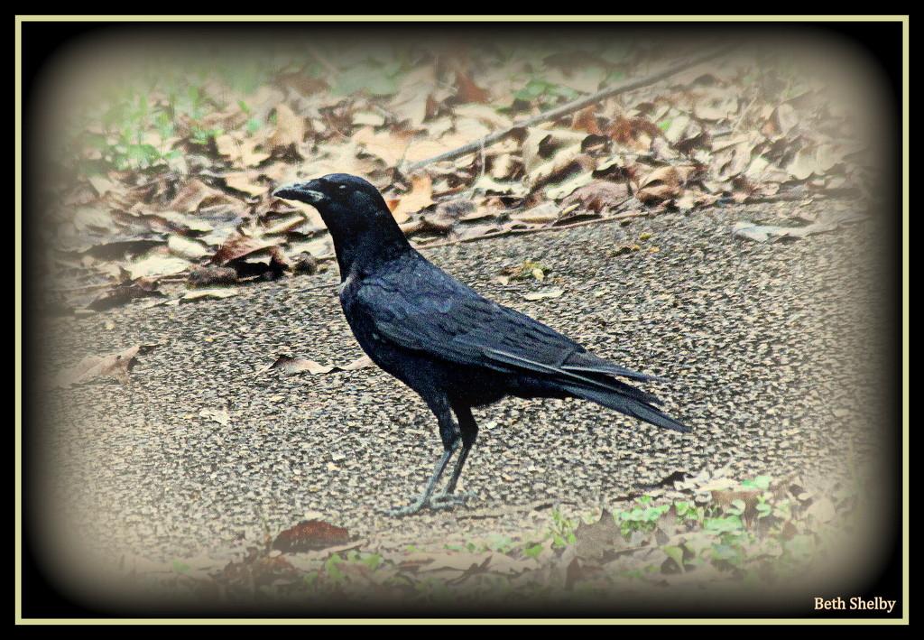 The Raven by vernabeth