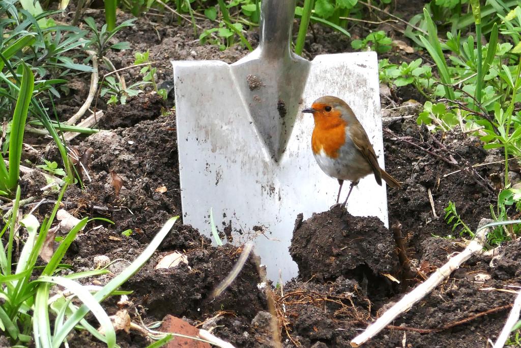 Gardening companion by shepherdman
