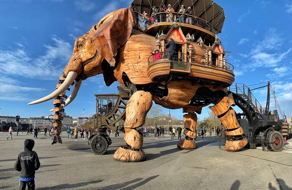 Wooden elephant.  by cocobella