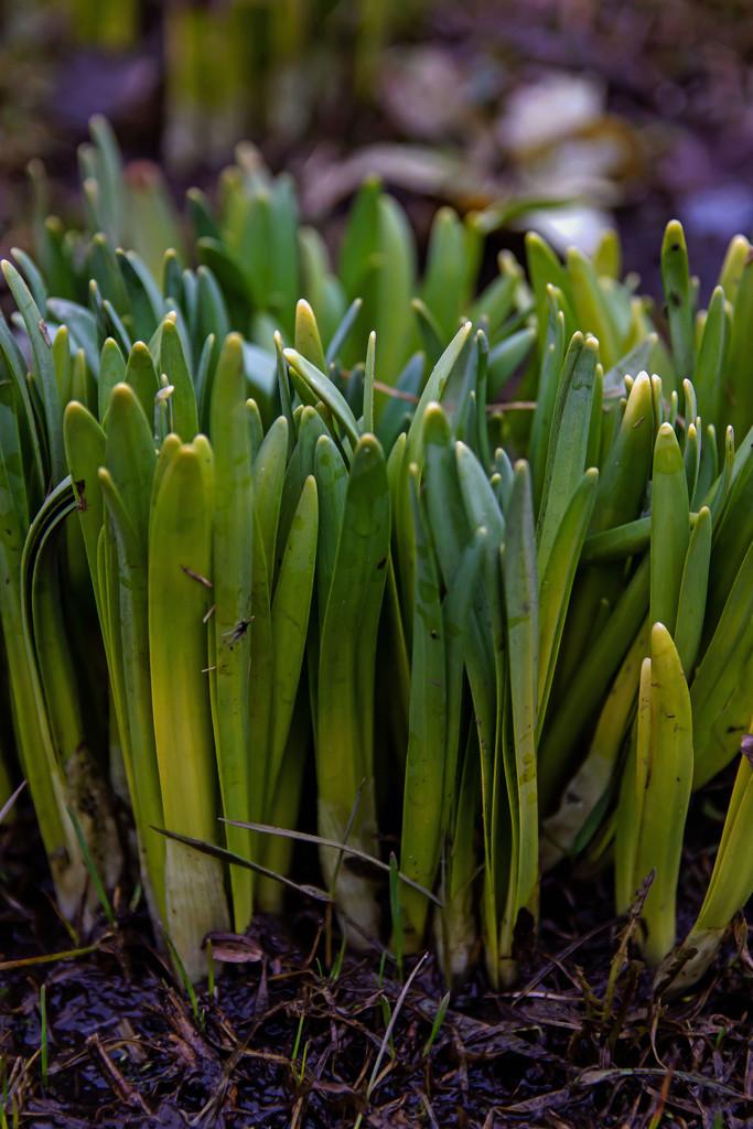 April Words - Hobbies by farmreporter