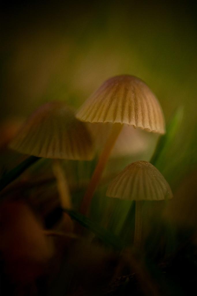 Tiny fungi by maureenpp