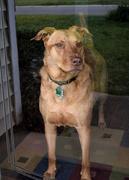 1st Apr 2020 - My Guard Dog
