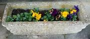 2nd Apr 2020 - Winter Flowers