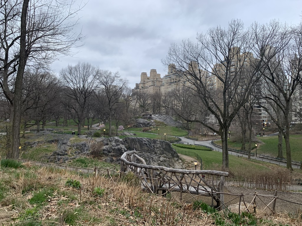 Native Meadow, Central Park by blackmutts