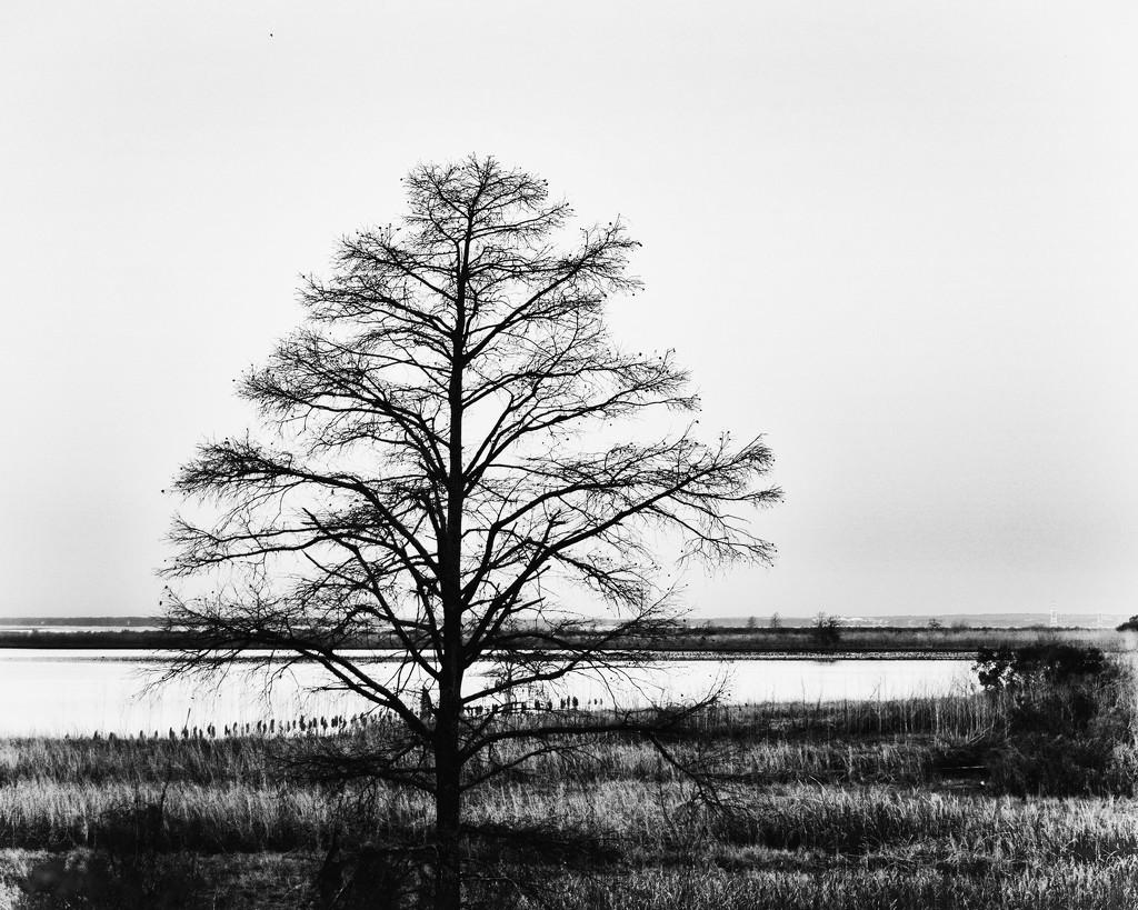 Mobile Bay by eudora