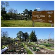 3rd Apr 2020 - Personal Gardens