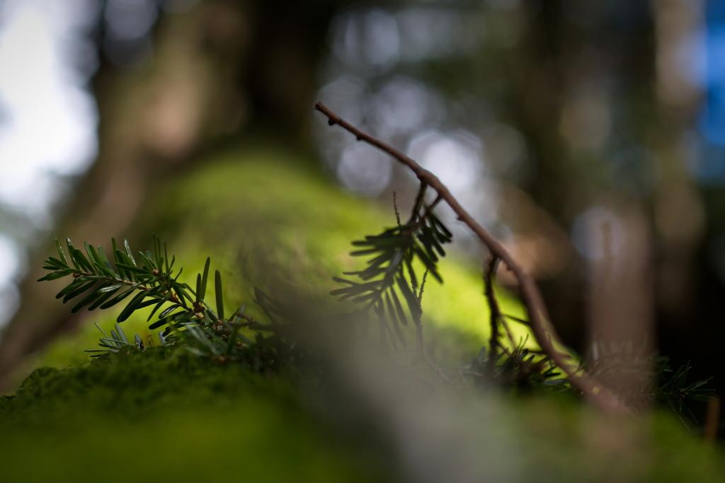 The Deep woods by teriyakih