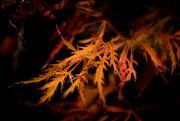 3rd Apr 2020 - Autumn leaves