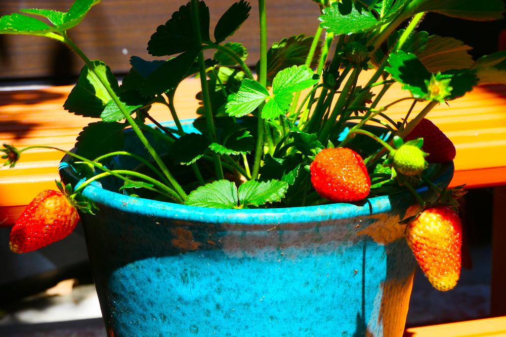 Fresh Fruit by redy4et