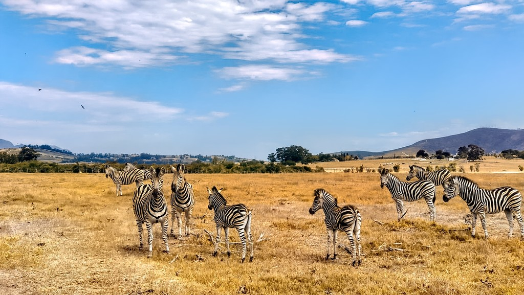 Villeira game drive by ludwigsdiana