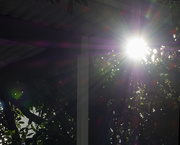 3rd Apr 2020 - Morning Light on Trees