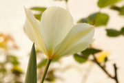 3rd Apr 2020 - Picking flowers
