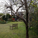 April 2nd plum tree and bench