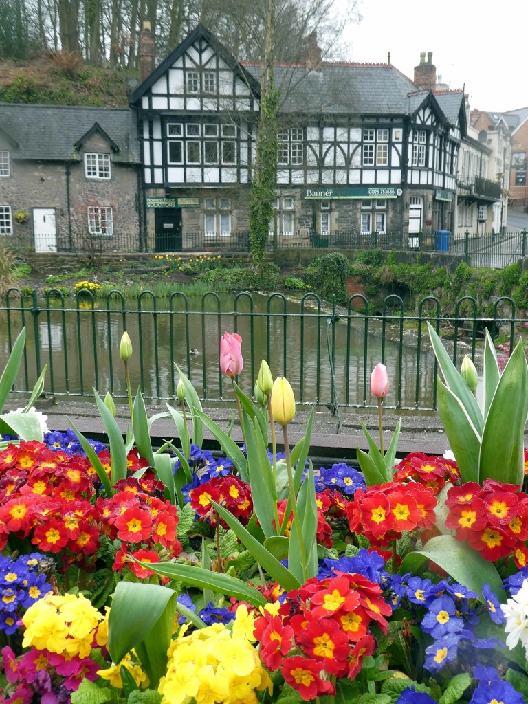 Village in Bloom by cmp