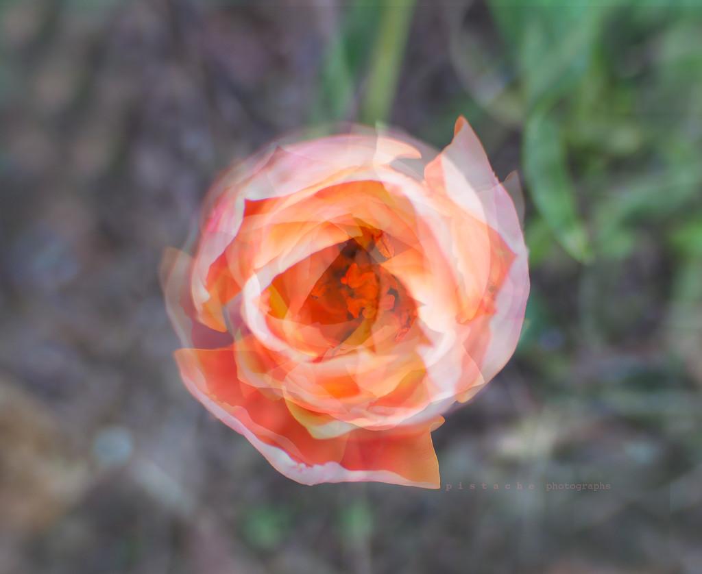 paper flower by pistache