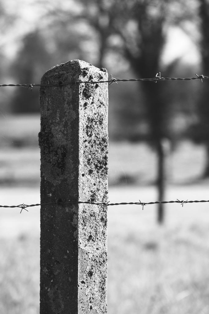 Fence Post...forever supportive by s4sayer