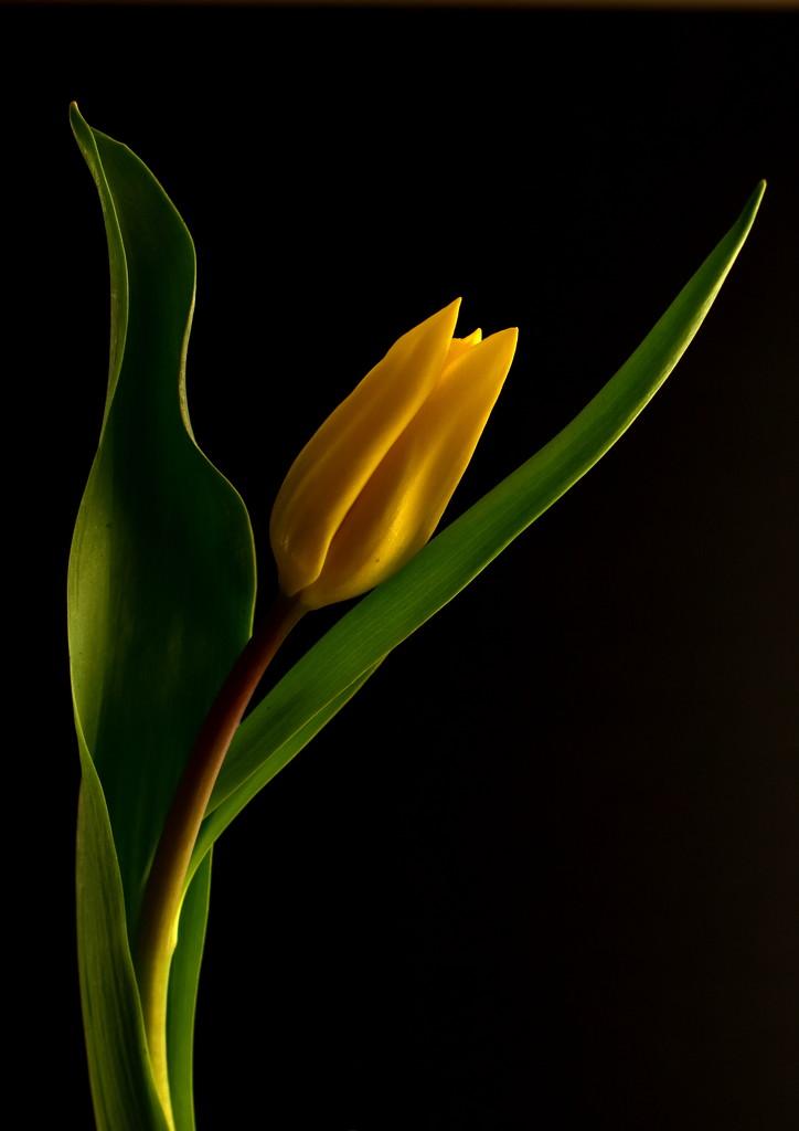 Yellow Light by jayberg