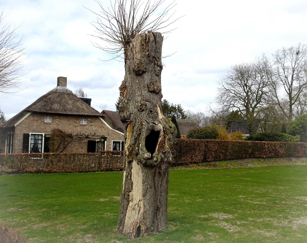 fantasy tree by gijsje