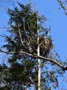 24th Mar 2020 - Big Nest, Blue Sky