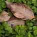 Remnant Leaves 2