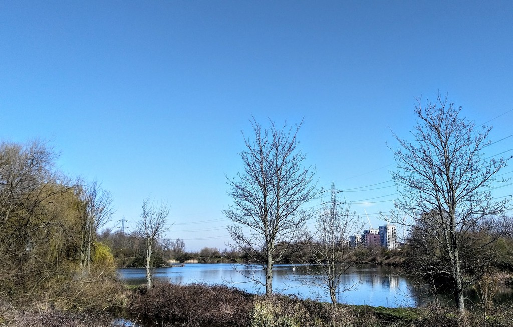 Wetlands view by boxplayer