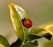 4th Apr 2020 - Ladybird