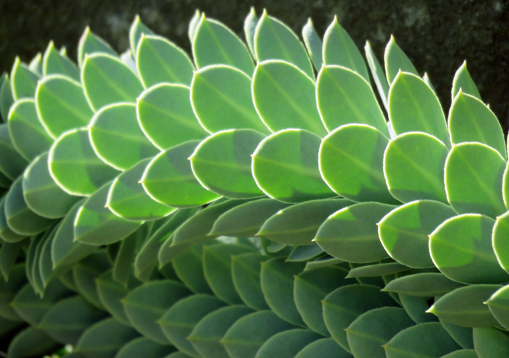 Rockery Plant by seattlite
