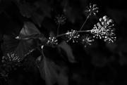4th Apr 2020 - Sun in the hedge