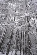 4th Apr 2020 - White trees