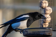 4th Apr 2020 - We're going to need a bigger feeder