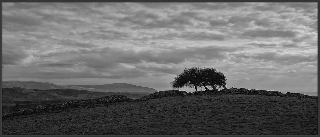 Windswept by ellida